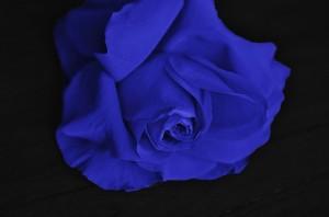 roses-292594_640
