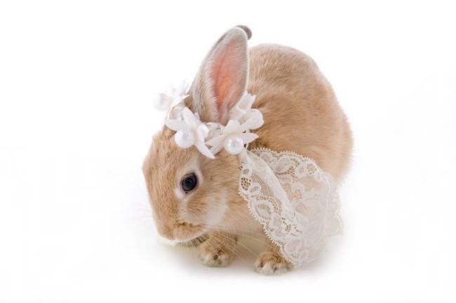 186結婚式の二次会にペットも参加させたい場合はどうしたらいい?2