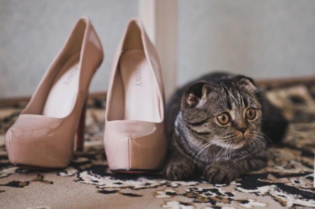 186結婚式の二次会にペットも参加させたい場合はどうしたらいい?3