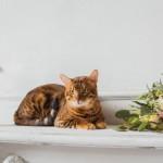 結婚式二次会にペットも参加させたい場合はどうしたらいい?