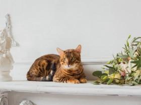 186結婚式の二次会にペットも参加させたい場合はどうしたらいい?1